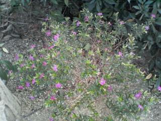 がんばれ、小さなお花!