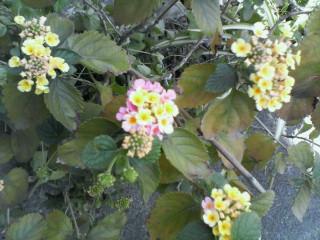 お花復活!