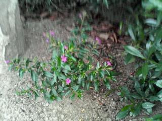 小さなお花が咲いていました。
